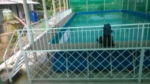 Hồ bơi bạt nhựa di động 05